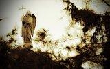 Hrubieszów: Udana kwesta na cmentarzu