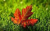 Józefów: Jesienni artyści na szczytny cel