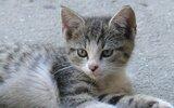 Głusk: Nagrody za kocie zdjęcia przyznane (foto)