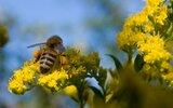 Powiat Lubelski: Innowacyjny inkubator pszczeli