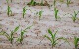 Gościeradów: Ostatnie wnioski o rekompensaty za suszę
