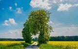 Krynice: Roztoczańskie drzewa w foto-konkursie (foto)